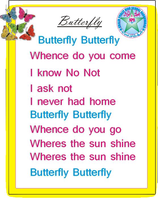 buterfly11